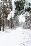 lasowa śnieżna zima Zdjęcie Stock