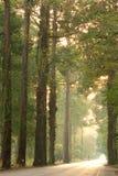 Lasowa aleja Zdjęcie Stock