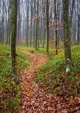 Lasowa aleja Fotografia Stock