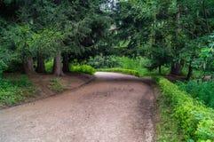 Lasowa aleja Zdjęcia Stock