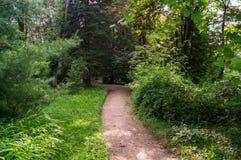 Lasowa aleja Zdjęcie Royalty Free