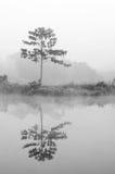 Lasowa bagno scena Zdjęcia Stock