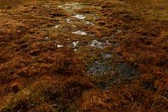 Lasowa bagno spadku kolorów pokrywa mech i bagno trawa Obrazy Stock