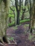 Lasowa chodząca ścieżka przez zielonych lasów drzew Zdjęcia Stock