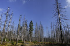 lasowa choroba obraz stock