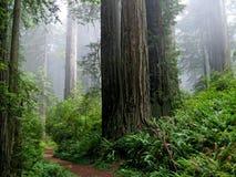 lasowa ścieżka Zdjęcia Royalty Free