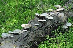 Lasowa dekompozycja zdjęcie stock