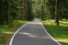 lasowa droga Obraz Royalty Free