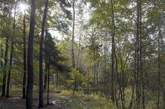 Lasowa droga Zdjęcie Royalty Free