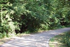 lasowa droga dla jogging lub jeździć na rowerze w słońcu obrazy royalty free