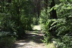 lasowa droga dla jogging lub jeździć na rowerze w słońcu fotografia stock