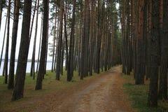 Lasowa droga i woda w sosnach blisko rezerwuaru Zaslavsky, Minsk region obraz stock