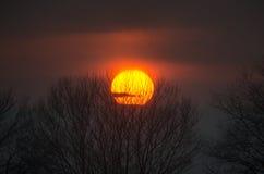 Lasowa droga pod zmierzchów sunbeams Piękny zmierzch z pomarańcze i czerwienią chmurnieje za niektóre iglastymi drzewami z bliska Zdjęcia Stock