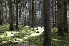 Lasowa droga przemian - światło słoneczne fotografia stock