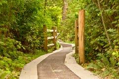 lasowa droga przemian Zdjęcie Stock