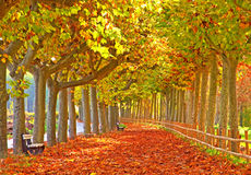 lasowa droga przemian Fotografia Stock