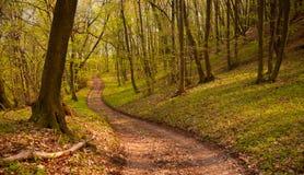 lasowa droga przemian Obrazy Stock