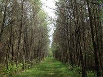 Lasowa droga przemian! zdjęcie stock