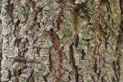 Lasowa droga przemian - Drzewna barkentyna zdjęcia stock