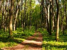 Lasowa droga przemian w zielonych drewnach przy zmierzchem Zdjęcia Stock