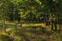 Lasowa droga w dębowym gaju pod światłem słonecznym Obrazy Royalty Free