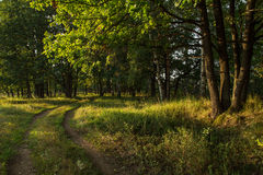 Lasowa droga w dębowym gaju pod światłem słonecznym Obraz Royalty Free