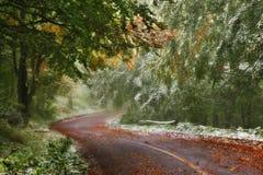 Lasowa droga w jesieni Zdjęcie Royalty Free