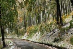 Lasowa droga w jesieni Zdjęcia Royalty Free