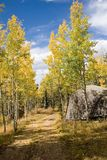 Lasowa droga w spadku (1) obrazy stock