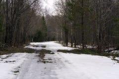 Lasowa droga w wczesnej wiośnie zdjęcie royalty free