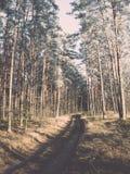 Lasowa droga z słońce promieniami w ranku Rocznik obrazy royalty free