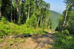 Lasowa Eksploatacyjna ścieżka Obraz Stock