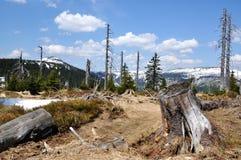 lasowa góra Zdjęcie Stock