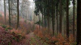 lasowa góra obrazy royalty free