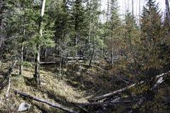Lasowa głębia Zdjęcia Royalty Free