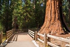 lasowa gigantyczna ścieżka zdjęcia stock