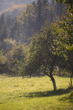 Lasowa halizna Obraz Royalty Free