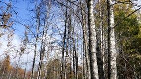Lasowa Halizna Zdjęcie Stock