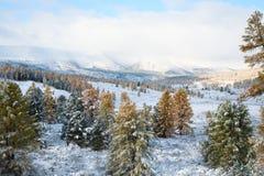 lasowa halna zima Zdjęcia Royalty Free