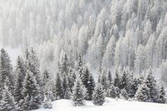 lasowa halna zima Zdjęcie Royalty Free