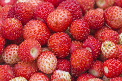 Lasowa jagoda - truskawki fotografia stock