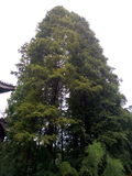 Lasowa jedność Zdjęcia Stock