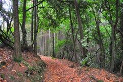 lasowa jesień ścieżka Zdjęcie Stock