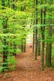 Lasowa jesień ścieżka Zdjęcia Royalty Free