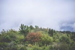 Lasowa jesień Obraz Royalty Free