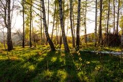 Lasowa jesieni natura Lasowej jesieni pogodny krajobraz - lasowej jesieni żółci drzewa i sunbeams błyszczy przez drzewnych wierzc Zdjęcie Stock