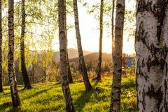 Lasowa jesieni natura Lasowej jesieni pogodny krajobraz - lasowej jesieni żółci drzewa i sunbeams błyszczy przez drzewnych wierzc Zdjęcia Royalty Free