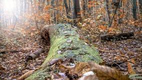 Lasowa jesieni scena fotografia stock