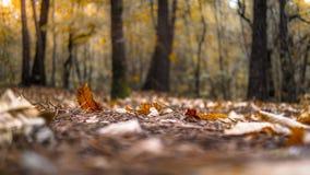 Lasowa jesieni scena obrazy royalty free