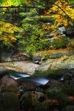 Lasowa jesieni sceneria Z zatoczką Obraz Stock